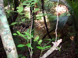 Typical bush scene