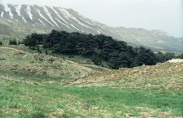The Cedars of God, one of the last surviving groves of the Cedars of Lebanon.