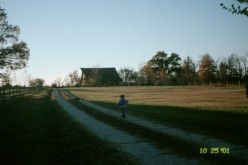 Sword strolls down our driveway in 2001 when we first moved in. The barn across the road from us, visible on the horizon, no longer exists.