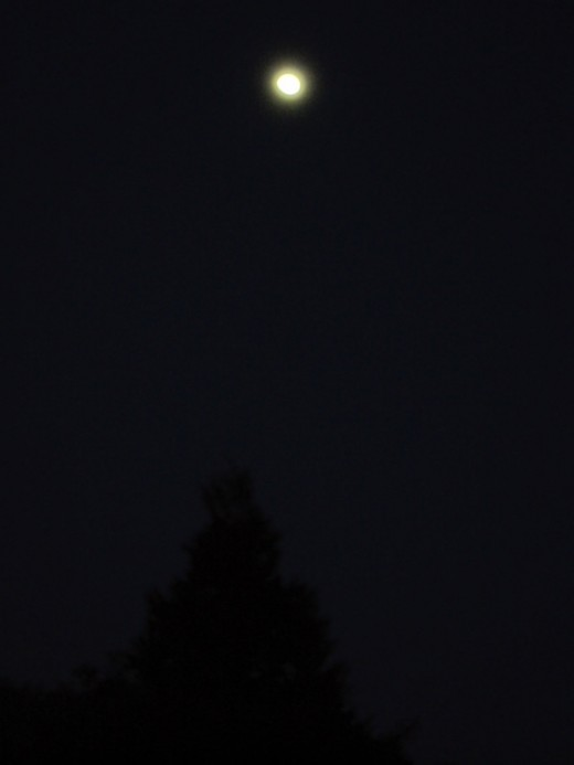 I especially love this picture with the moon directly above the cedar tree.