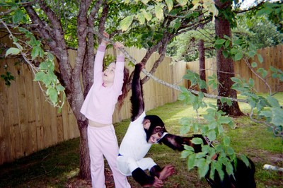 Sword and Bow climbing the dogwood tree in the backyard-- the fence was new at the time.