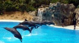 Dolphin- dance
