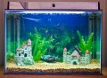 Exploding Marine Stealth Pro aquarium heater, a do it yourself (DIY) fish tank project run amuck. Thermometer recall.