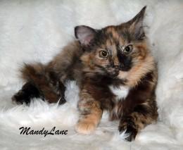MandyLane