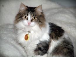 Mia (shelter name Abby)