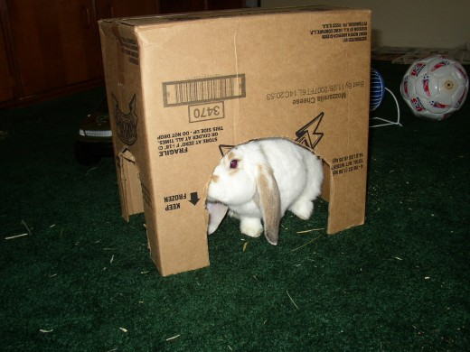 My pet rabbit hiding in box I made for him