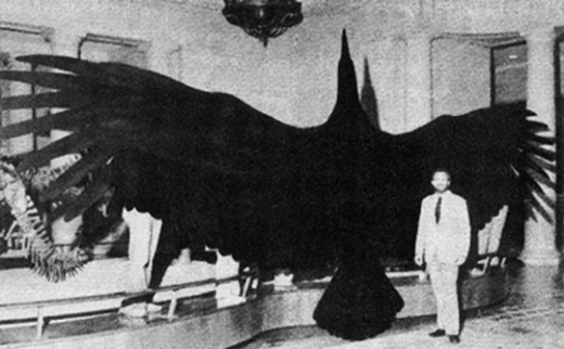 Model showing off the wingspan of a teratorn