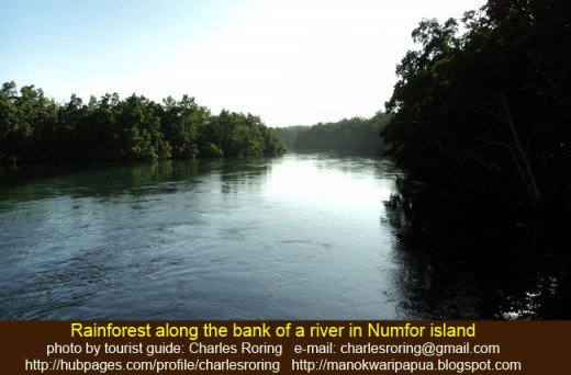 Rainforest picture the grow on the banks of a river in tropical island of Numfor