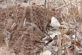 How to Solve a Pocket Gopher Problem