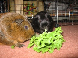 We both love lettuce!