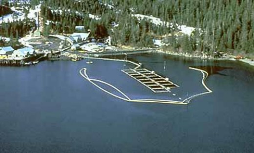 Salmon Hatchery Prince Williams Sound with Booms to exclude an oil spill