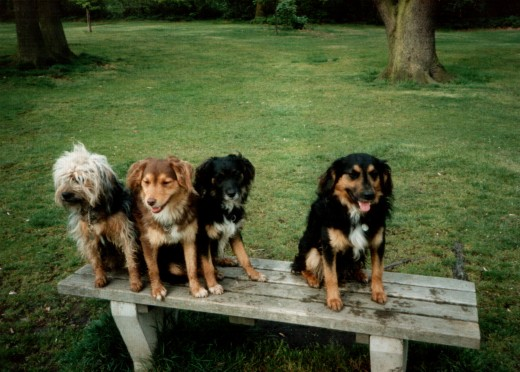 The very rare Norbury Mudhound - a selection of these wonderful animals.