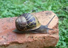 The Snail - Can you imagine a snail pushing and shoving in a queue?  Of course not.