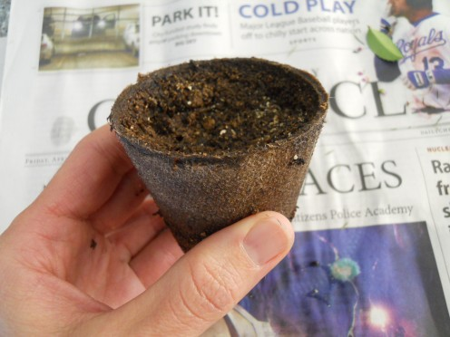 Peat pots are convenient because you can just plant the whole thing in the ground.  The roots will grow through it.