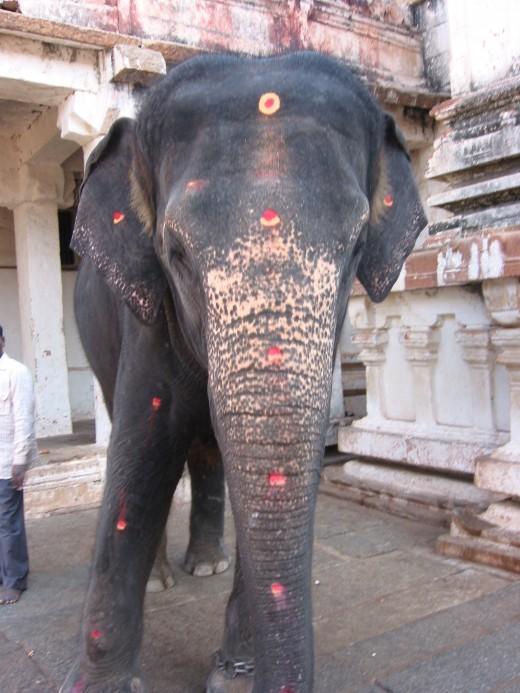 Holy temple elephant