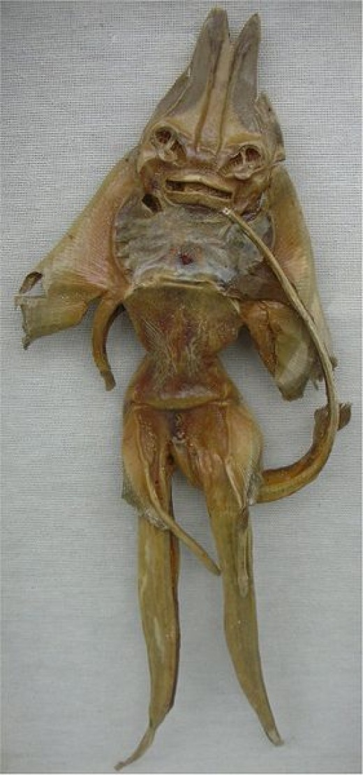 A Jenny Haniver created from a skate