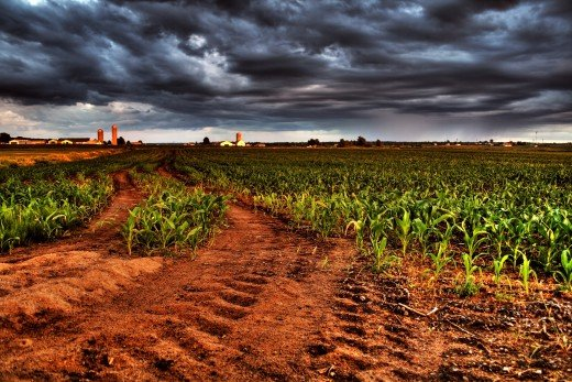 Cornfield sunset in Saint-Basile, Québec by shadowkill at sxc.hu