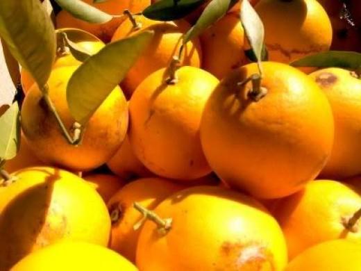 Oranges, Glorious Oranges