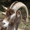 The Earth Goat profile image