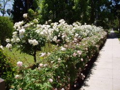 All-White Garden