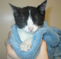 How To Give A Cat A Bath Without Getting Scratched