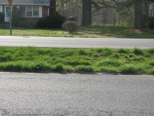 The green grass is even flourishing in the median strip!