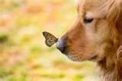 Dogs and Butterflies are the Same to Me