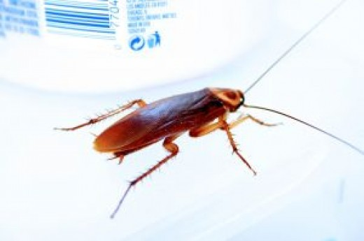 Cockroach crawling across a counter top
