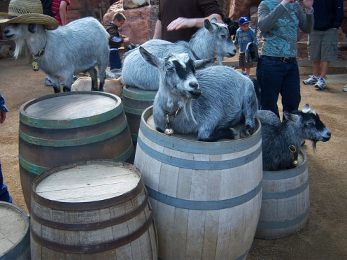 Drop by the Big Thunder Mountain Ranch to pet the goats and visit the other critters as a break from long ride queues and the bustling crowds.