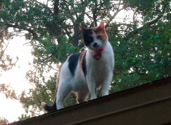 Sad Ending for My Calico Cat