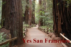 Vacation California to See Redwood Trees