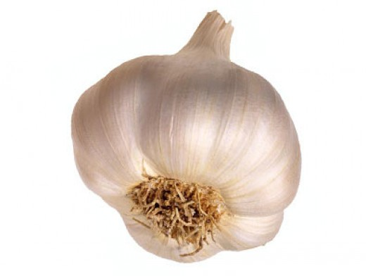 Garlic contains sulfoxides and disulfides which may be antibacterial for humans, but will damage red blood cells and lead to anemia in animals