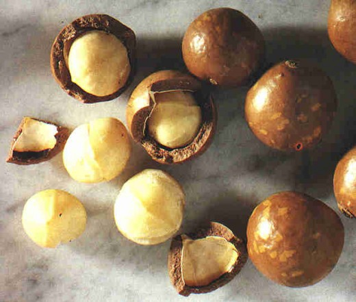 This tree genus possess poisonous and/or inedible nuts, such as M. whelanii and M. ternifolia; the toxicity is due to the presence of cyanogenic glycosides. The only safe nut for humans as a food source are the macadamia. Shown covered in chocolate.