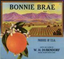 free cross stitch pattern Bonnie Brae oranges
