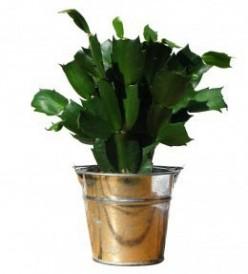 Houseplants: Improving the Plant Environment