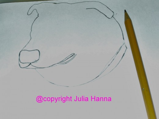 I have now finished drawing the outline of Buster's head.
