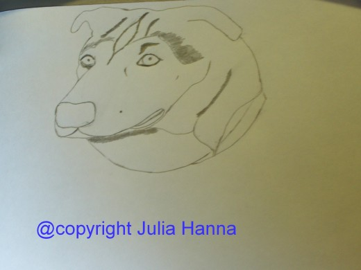 Here I am adding the wrinkles to Buster's head.  Buster had many wrinkles on his head, and was affectionately called the wrinkle head dog.  It is interesting to try to draw these.