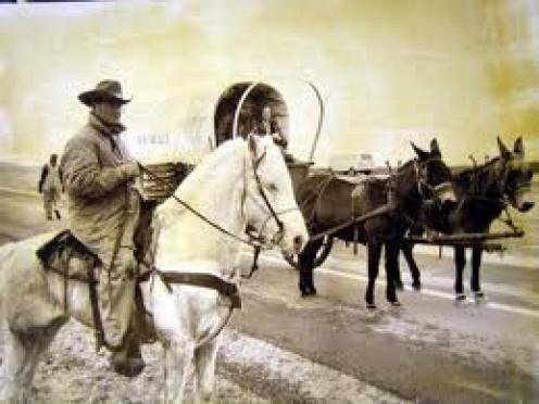 Cowboys  And Wagon Trains.