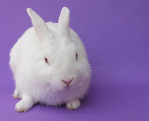 With Easter approaching, Animal Shelters are encouraging people to rescue a homeless bunny if you have decided that they will be a welcome addition to your home and family!