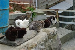 "Cat Island, Japan. It is like that ""Cat Lady"" but it is an entire island!"