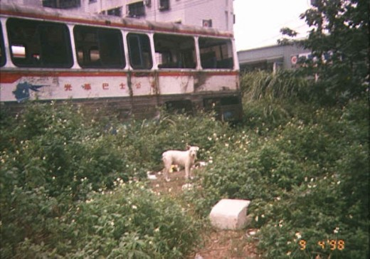 A stray dog eyes me warily beside a derelict bus
