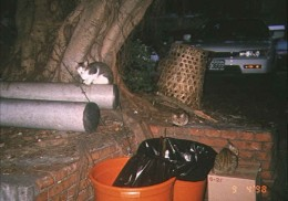Stray cats can be found near open garbage receptacles.