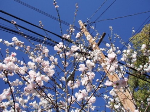 Spring fruit flowers.