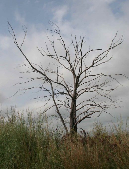 Mpumalanga 2010