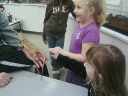 The kids petting a lizard at Funday Sunday at the Mazza Museum.