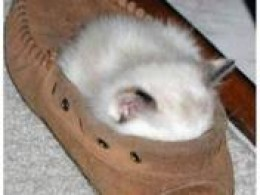 """THIS MOCCASIN BED IS JUST THE RIGHT SIZE!  SMELLS NICE AND LEATHERY, TOO!'"