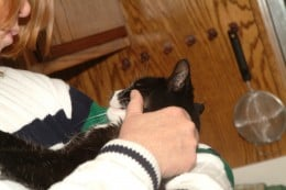 The act of petting a cat can reduce pain significantly.