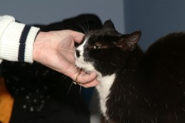 Petting a cat can bring a calm feeling to the human spirit.