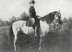 Traveller: American Civil War Horse of General Robert E. Lee