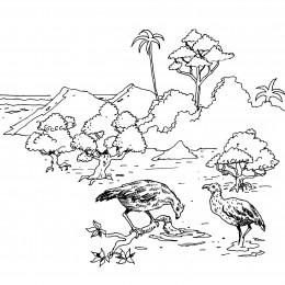 Nesting pairs of scrubfowl feed in mangrove shallows.